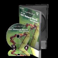 مستند حمله مورچه ها BBC Natural World ، Ant Attack